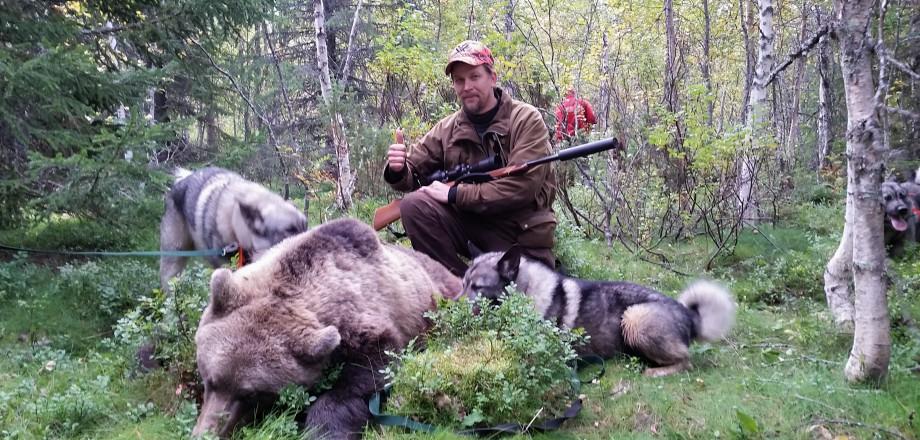 Björnjakt Storåbränna 2014